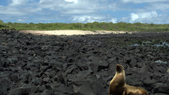 4x4 Surf Tours Galapagos Islands Surfing