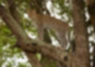 Seringetti-Masai Mara_MG_7891.jpg