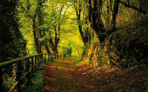 A path covered in leaves winds towards the foreground, with a fence on the left and a stone wall on the right, with tall leafy green trees on both sides of the path,