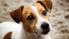 What if your Dog Goes Missing in Long Beach?