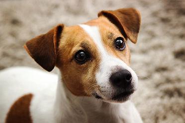 Transporte de animales perro