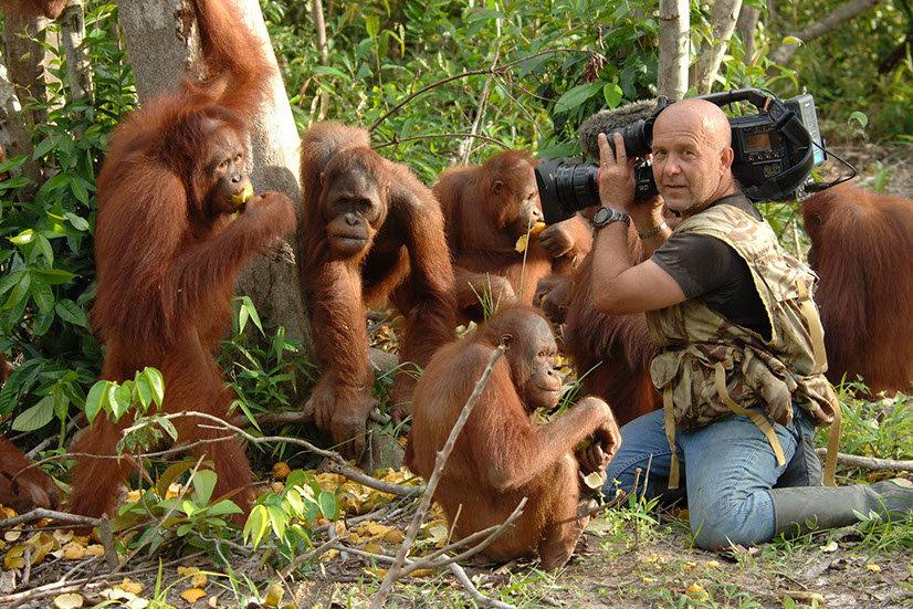 orangoutang-crop-u59930.jpg