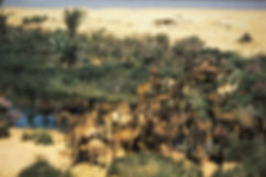 oasis goulimine chameau-7.jpg