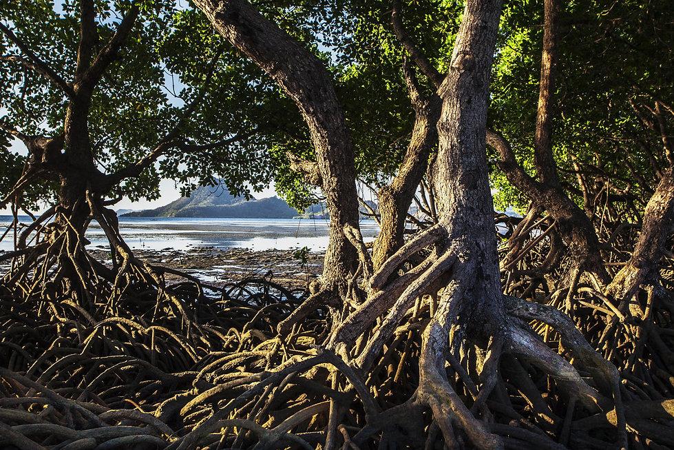 Mangrove .Village de Rinca Desa-Jacques Bravo