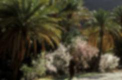 Tafraoute, femme dans la palmeraie 2-3.j