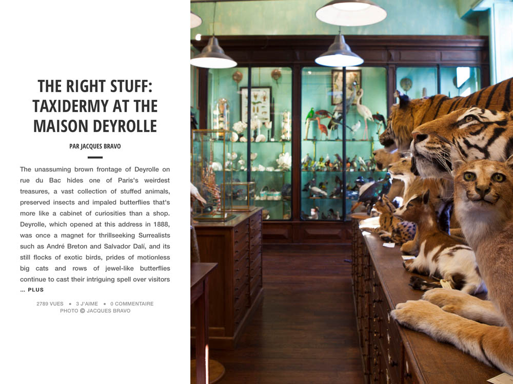 THE RIGHT STUFF: TAXIDERMY