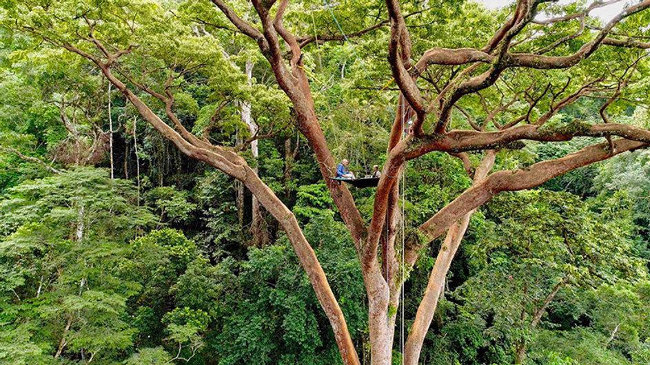sur la cime des arbres au gabon,  pendant le tournage de quelques scènes du futur film de Luc Marescot intitulé « Poumon vert et tapis rouge ». Ces prises de vue ont eu lieu dans la forêt équatoriale gabonaise.