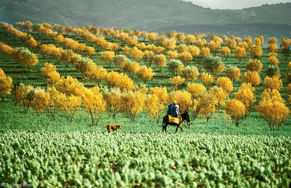 Environ de Moulay Idriss. Maroc. Jacques Bravo