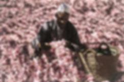 roses_DxOFP-5.jpg