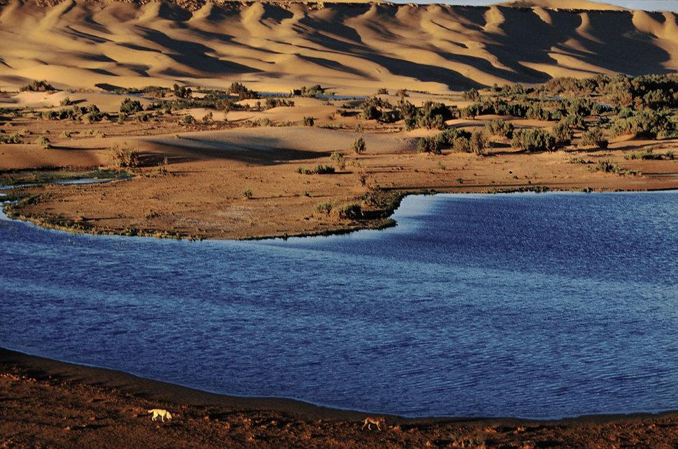 laayoune oasis 3-11.jpg