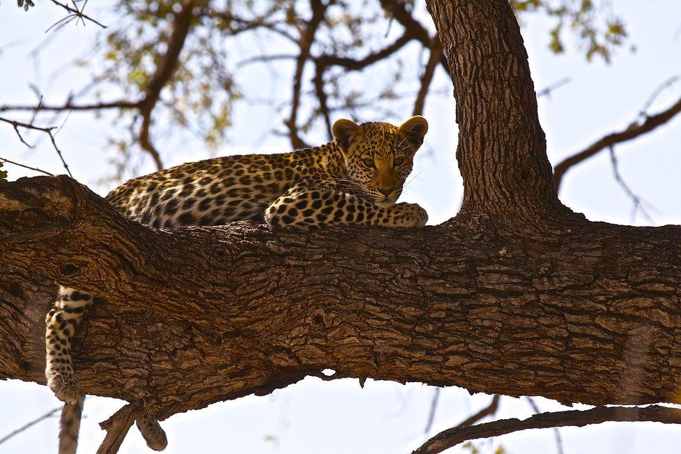 UNESCO-Botswana.jpg