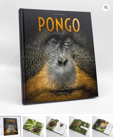 """Couverture du livre """"Pongo""""de Maxime Aliaga"""
