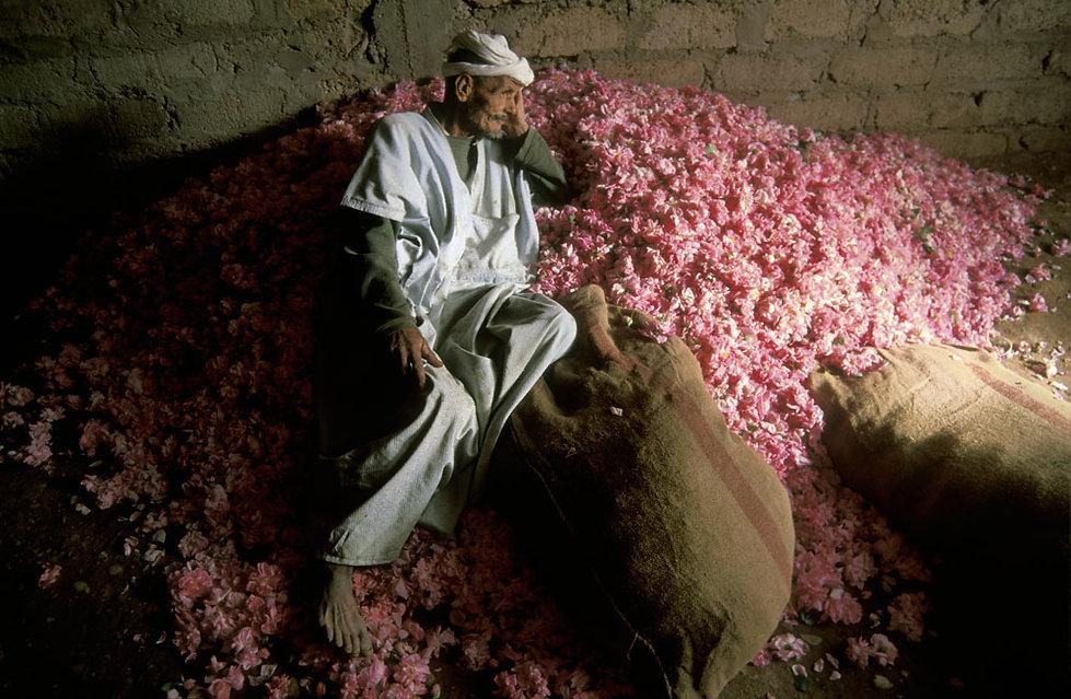 rose homme allonge-2.jpg