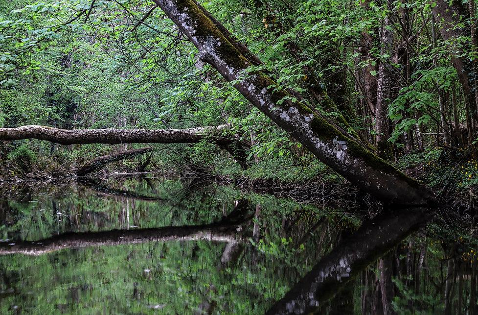 La rivière Serein à Noyers-sur-Serein dans le département de l'Yonne en Bourgogne. Un des plus beau village de France. Photo de Jacques Bravo