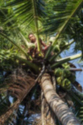 Ile de Savu, Marileba-Ile de Savu-Indonesie-Jacques Bravo