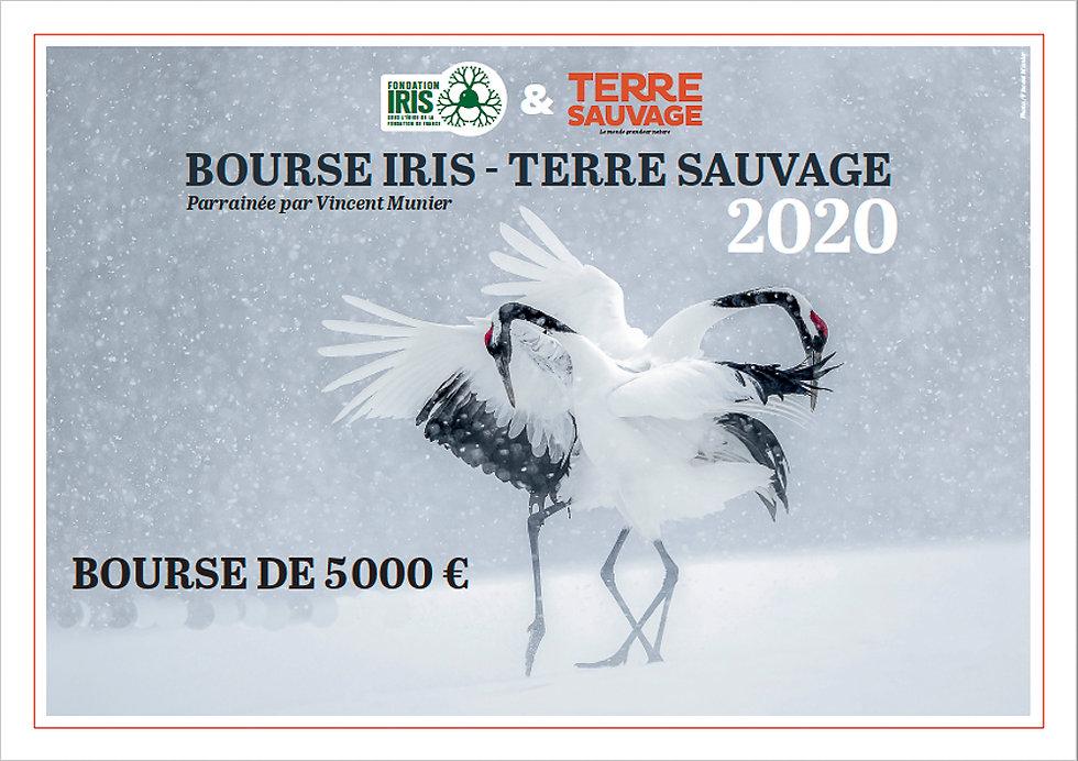 Bourse iris, terre sauvage, oiseaux dans la neige, parade, fondation Iris