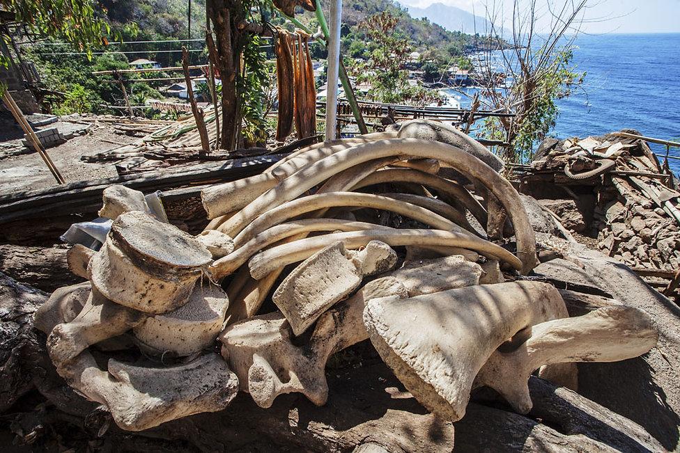 Ile de Lembata, Lamalera, le village des chasseurs de baleines de Lamalera, peties iles de la Sonde, Indonésie, Jacques Bravo