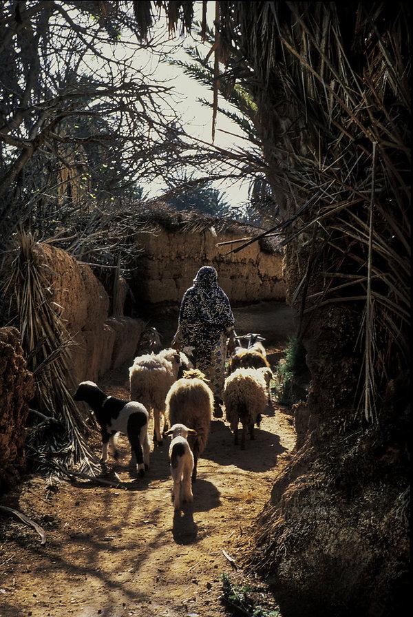 goulimine femme et moutons-1.jpg