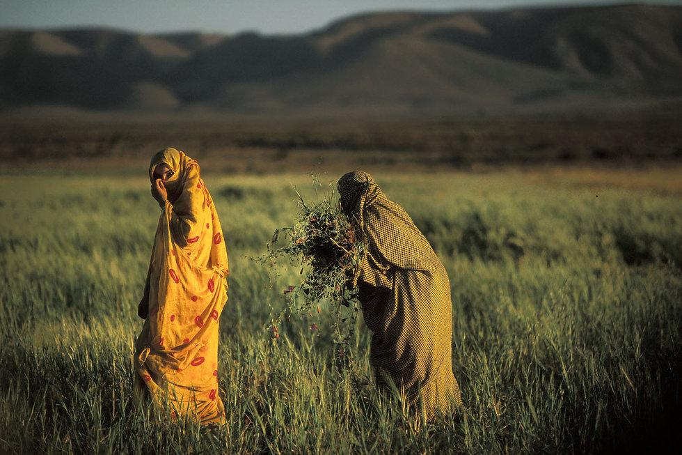 femmes champs goulimine-9.jpg