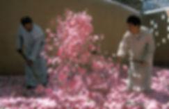 fete des roses 1-20.jpg
