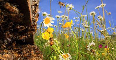 Sensibilisation à l'environnement, fondation Iis, ruche d'abeills