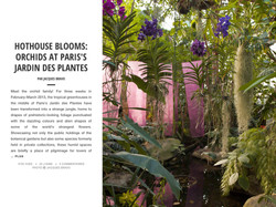 HOTHOUSE BLOOMS