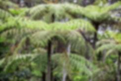 Arboretum du volcan Kelimutu, ile de Florès, Indonésie, Jacques Bravo