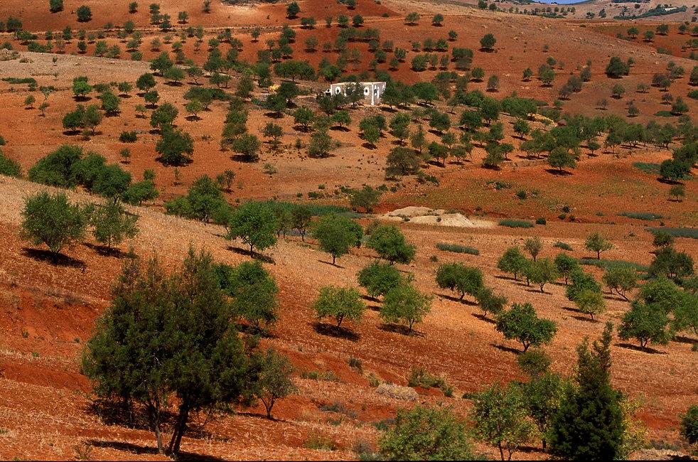 paysage env tanger 3.jpg