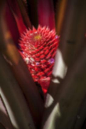 Végétation sur l'Ile de Besar, petites iles de la Sonde, Indonésie, Jacques Bravo