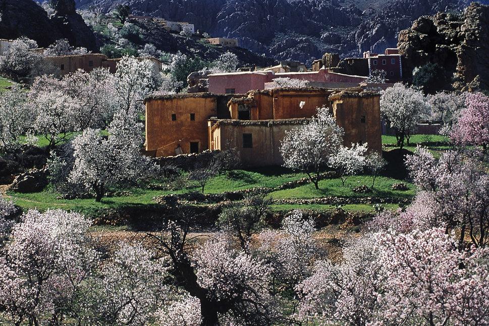 Tafraoute, Amandiers en fleurs-2.jpg