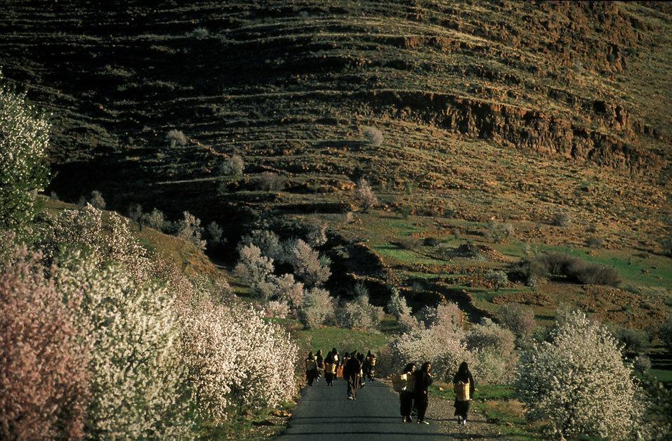 route des amandiers tafraou-15.jpg