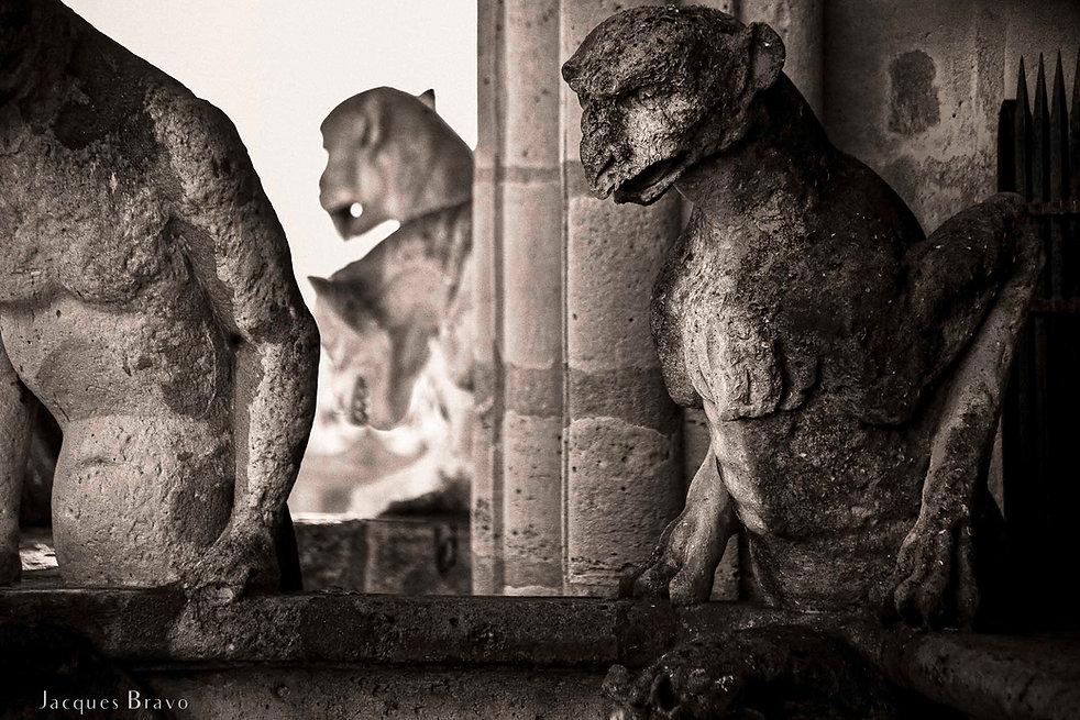 Les chimères de Notre-Dame