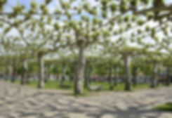 arbres-paris-crop-u33741.jpg