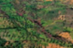 paysage env tanger 2.jpg