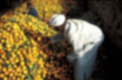 marche orange goulimine-19.jpg