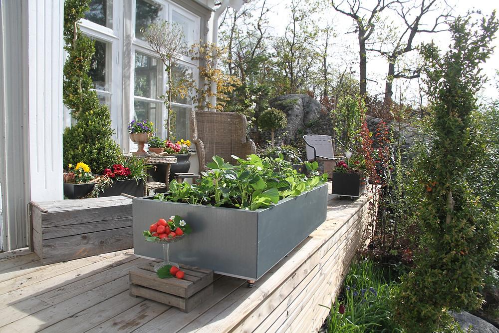 Sneglesikker plantekasse med jordbær og salat fra BEDD