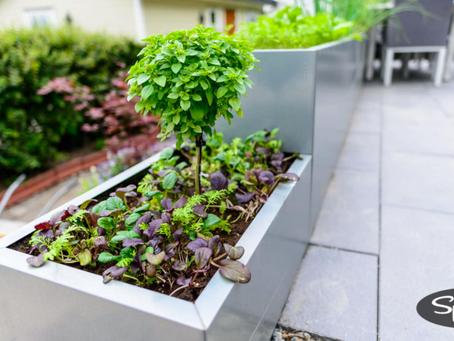 Fra Spirera: Dyrk salat og urter i BEDD