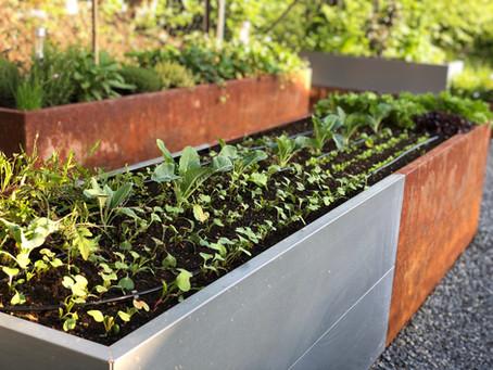 Kjøkkenhage med salater, urter og grønnsaker