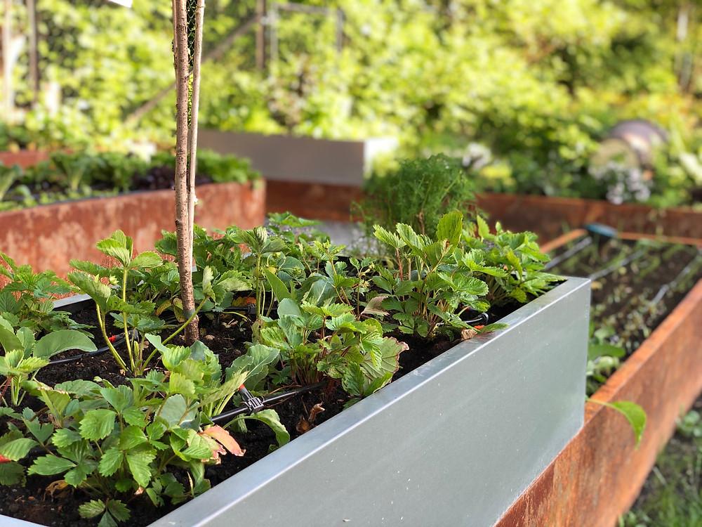 BEDD plantekasser i stål