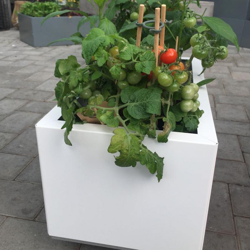 BEDD 60x30 med tomater