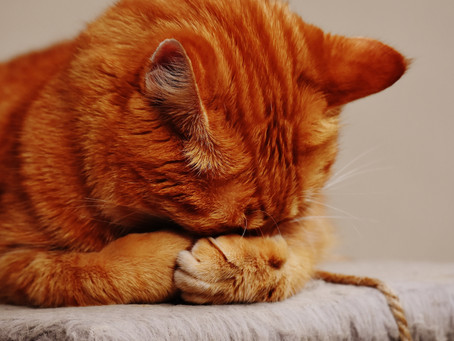 Common Myths About Cat Grooming
