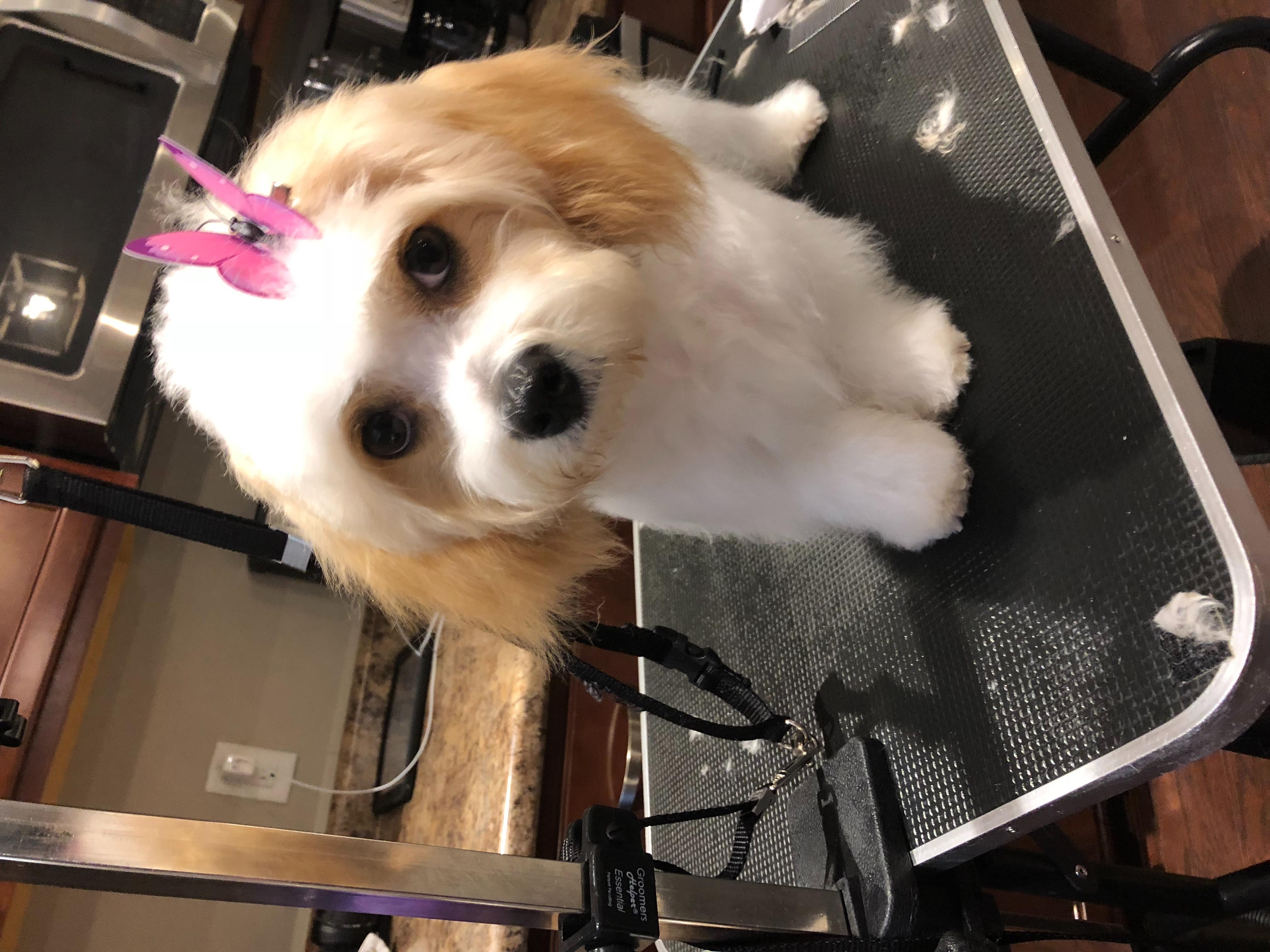 House call dog grooming