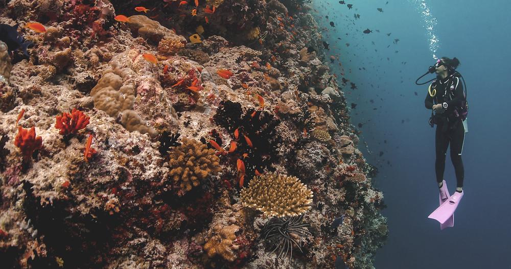 Anantara Kihavah Maldives Experience