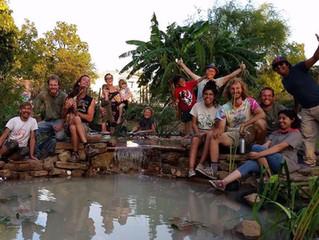 Roots Of Change 2018 Garden Recap