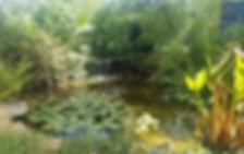 ROC fall 2019 Pond.jpg