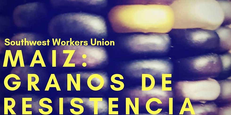 Maiz: Granos De Resistencia