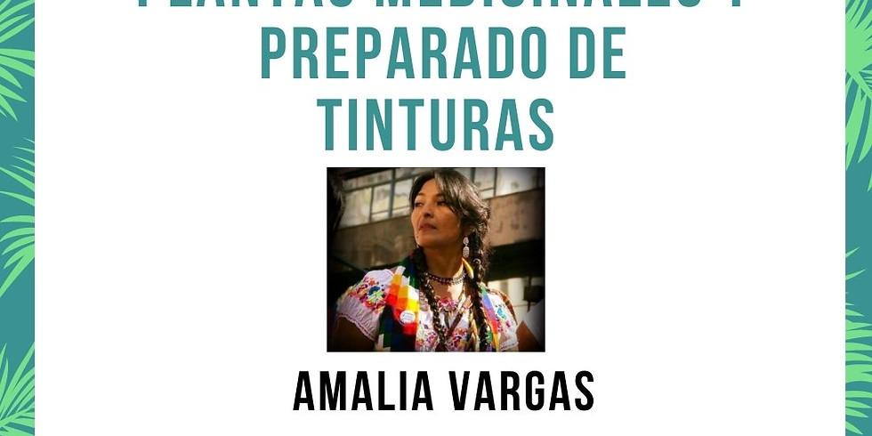 Plantas Medicinales y Preparado de Tinturas Por Amalia Vargas
