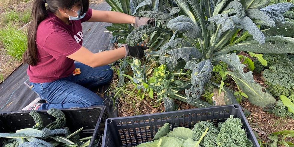 Garden Workday   Dia de Trabajo en el Jardin  (1)