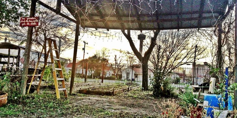 Planting Fruit Trees with Trinity University