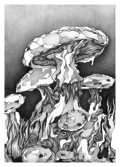 Fine Art Print - Pilze